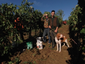 tempo di vendemmia - harvest time